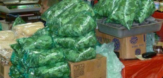 Las hojas de coca aumentaron 2000 % / EL MEJOR NEGOCIO EN LA CUARENTENA